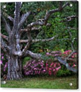 Oak And Rhodies Through Glass Acrylic Print