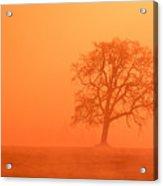 Oak At Sunrise Acrylic Print