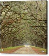 Oak Avenue Acrylic Print