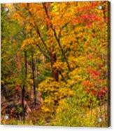Oak Creek 1 Acrylic Print