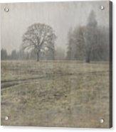 Oak Field Acrylic Print