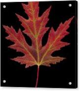 Autmn Leaf Acrylic Print