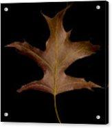 Oak Leaf Acrylic Print