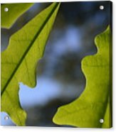 Oak Leaves Abstract Designed By Nature Acrylic Print