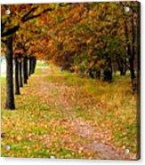 Oak Line Acrylic Print
