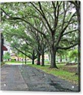 Oak Lined Drive Acrylic Print