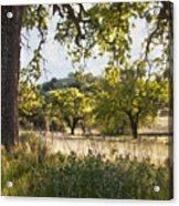 Oak Meadow Acrylic Print