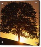 Oak Metal Acrylic Print