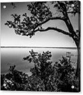 Oak On A Bluff - Black And White Acrylic Print