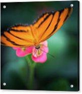 Oak Tiger Butterfly- 2 Acrylic Print