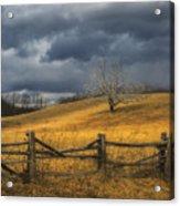 Oak Tree In Storm Acrylic Print