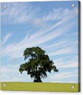Oak Tree Landscape Acrylic Print
