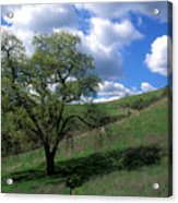 Oak Tree With Clouds Acrylic Print