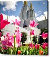 Oakland Pink Tulips Acrylic Print
