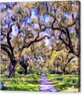 Oaks And Spanish Moss Acrylic Print