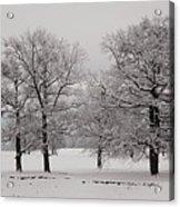 Oaks In Winter Acrylic Print by Gabriela Insuratelu