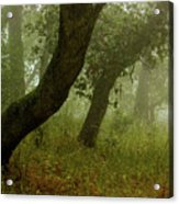 Oaks Off The Trail Acrylic Print