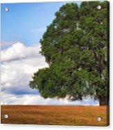 Oaktree Acrylic Print