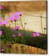 Oasis In The Desert Acrylic Print