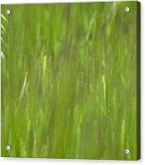 Oatfield Acrylic Print