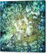 Observation Acrylic Print