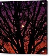 Ocala Moonrise Acrylic Print