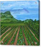 Ocean Berries Acrylic Print
