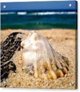 Ocean Beyond A Shell Acrylic Print