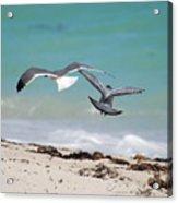 Ocean Birds Acrylic Print