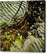 Ocean Bouquet Acrylic Print