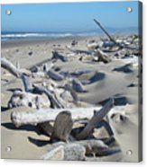 Ocean Coastal Art Prints Driftwood Beach Acrylic Print by Baslee Troutman