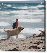 Ocean Dog Acrylic Print