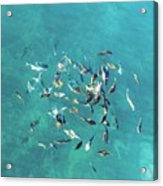 Ocean Marine Acrylic Print