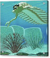 Ocean Opabinia Acrylic Print