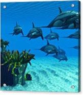 Ocean Striped Dolphins Acrylic Print