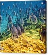 Oceans Below Acrylic Print