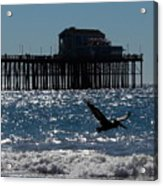 Oceanside Resident Photograph Acrylic Print