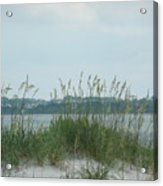 Oceanview Through Seaoats Acrylic Print