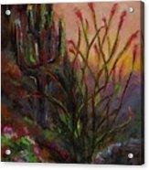 Ocotillo At Sunset Acrylic Print