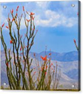 Ocotillo Cactus With Mountains And Sky Acrylic Print