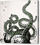 Octopus Tentacles Acrylic Print