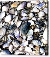 Ocracoke Shells Acrylic Print