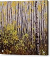 October Aspen Acrylic Print by Debra Mickelson
