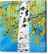 October Birch Acrylic Print