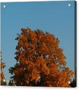 October Day Acrylic Print