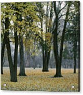 October In Palouse City Park Acrylic Print