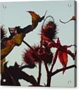 October Light Acrylic Print