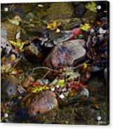 October Puddles Acrylic Print