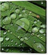 Drops Of Rain Acrylic Print