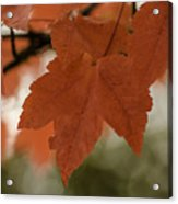 October Red Acrylic Print